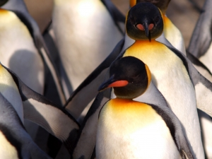 penguins-walking-in-lines-1373712-m